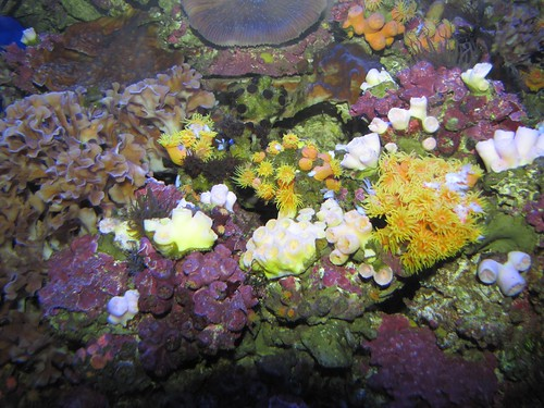 rainbow of coral