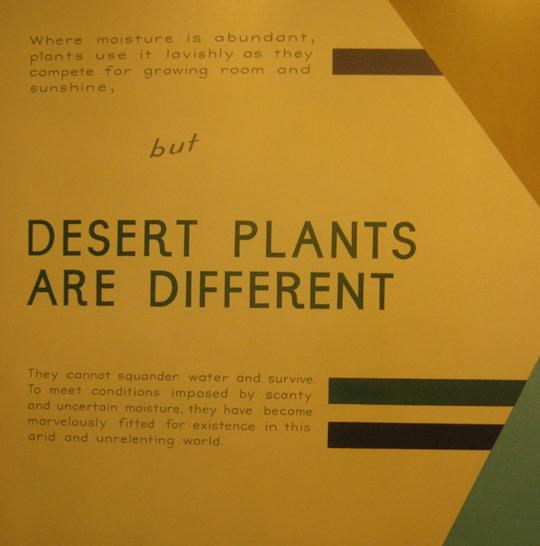 15 desert plants