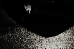 (angex) Tags: bw film cat naturaclassica