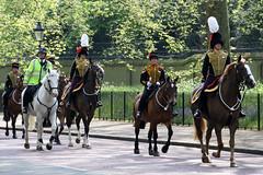 Kings Troop Royal Horse Artillery (NTG's pictures) Tags: birthday horse london gun salute royal queens kings artillery troop 41