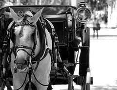 andalucia: caballo (gregjack!) Tags: spain andalucia seville sevilla horse dof bw blackandwhite caballo mono