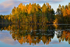 Around Sunset Time (tinamar789) Tags: autumn sunset island colorful color forest pond pine tree trees nuuksio national park evening espoo finland
