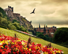 Edinburgh City (E.L.A) Tags: uk cloud flower bird castle history animal horizontal architecture outdoors photography scotland flying edinburgh day edinburghcastle hill nopeople freshness gettyimages tranquilscene formalgarden oneanimal capitalcities traveldestinations colorimage fragility beautyinnature oldruin animalthemes march2011