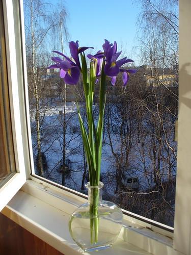Spring, iris, views