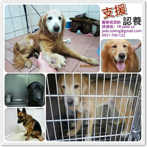 「助認養」台北5隻從各地收容所救出的「垃圾」,需要醫療支援助(最好是)認養,才有餘力再去挖寶,謝謝您~20110401