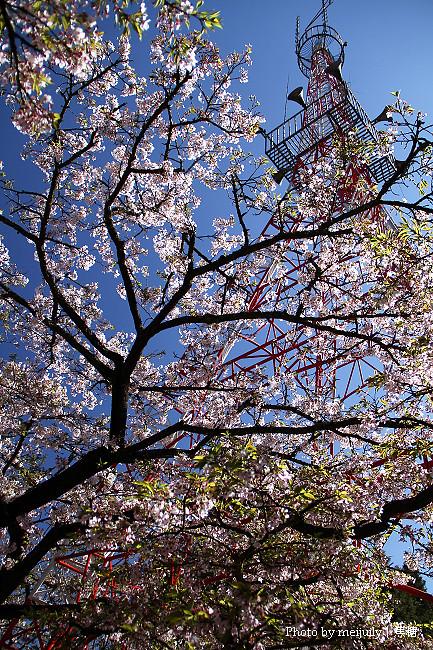 2011阿里山櫻花季晴天版03
