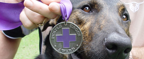 RSPCA Purple Cross