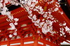 Miyajima Cherry Blossoms[Worldheritage] (h orihashi) Tags: japan cherry landscape gate shrine pentax hiroshima miyajima 桜 日本 torii k5 worldheritage itsukushima 宮島 世界遺産 coth 日本三景 supershot bej fineartphotos impressedbeauty crystalaward diamondclassphotographer flickrdiamond citrit cherryontopphotography hatsukaichishi pentaxk5