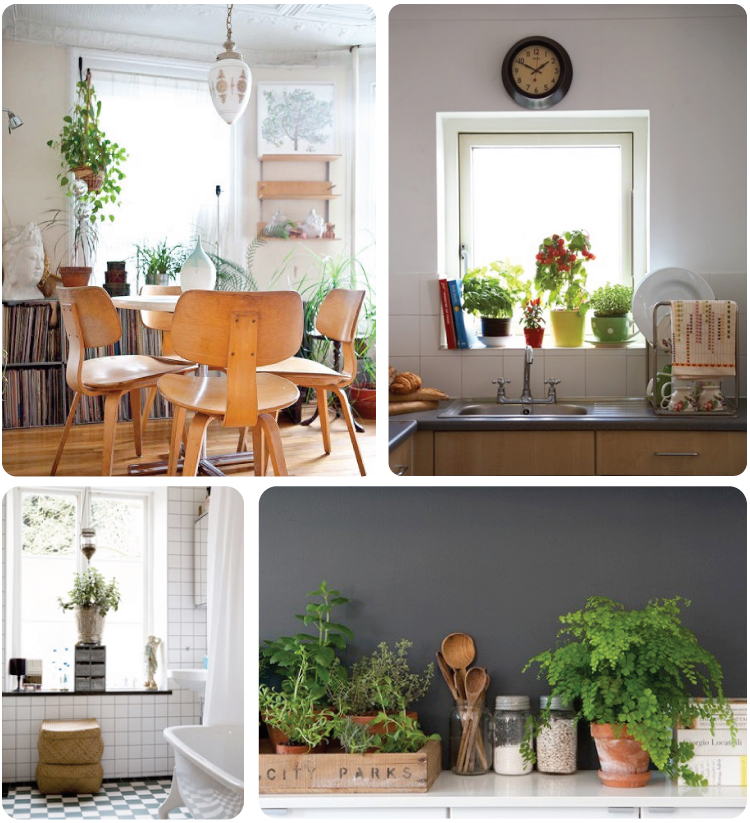 House Plants (1)