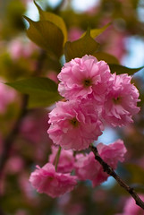 * (E_O_S) Tags: pink flowers plant macro nature closeup pretty fuji finepix fujifilm s5 superccd s5pro