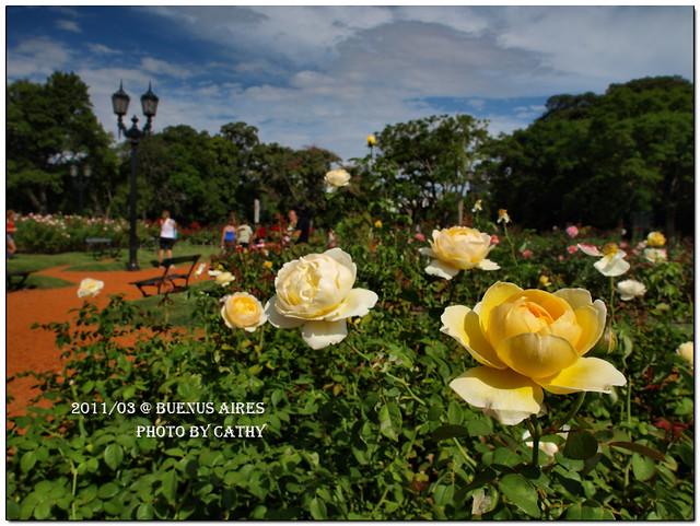 rose plaza-3