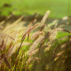 Breathless (1crzqbn~away) Tags: sunlight color nature grass square bokeh textures 7d legacy shining tistheseason breathless cityart coth simplybeautiful hbw artdigital idream fineartphotos memoriesbook bokehwednesday awardtree magicunicornverybest coth5 trolledproud crazygeniuses 1crzqbn bestofshining pareeericagoldendreamsgrunge