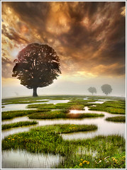 The Checkerboard (Jean-Michel Priaux) Tags: shadow sky tree nature water field grass clouds photoshop painting landscape shadows earth reflect swamp paysage marais arbre lonesome mattepainting vanagram mygearandme
