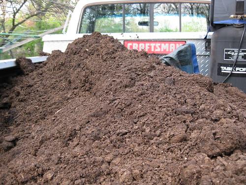 Mushroom Dirt