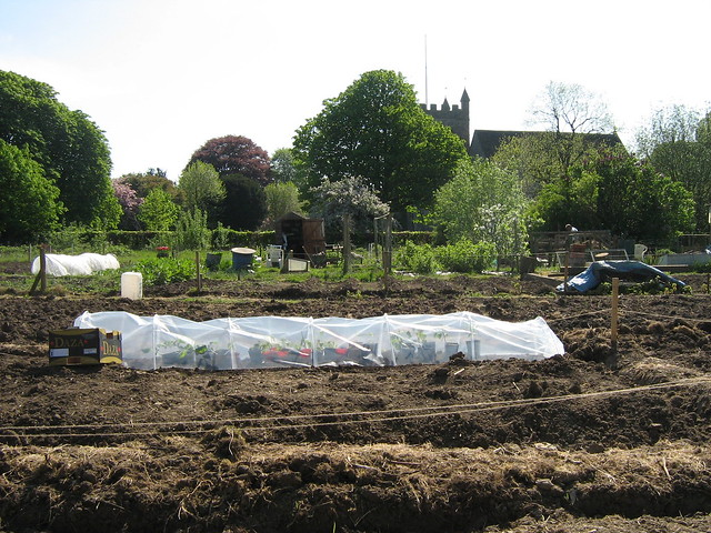 Victoria Deloria and Mr S's allotment