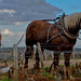 Horse Tilling Grand Cru Vineyards - Burgundy 2011
