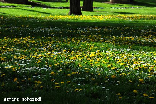 رنگ ...رنگ ...زندگی .....آرامش by setare motazedi