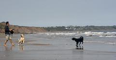 Reighton Dogs (Richard G. Hilsden) Tags: sea england dogs water coast sand britain sony yorkshire richard 2011 a350 yorkshirecoast reighton hilsden richardghilsden reightonholiday