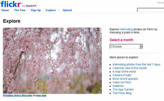 Weeping cherry blossoms on FP (myu-myu) Tags: explore explorefrontpage
