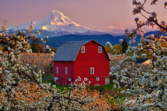 Hood River, Oregon (Gary Randall) Tags: flowers sunset oregon barn blossoms mthood mounthood redbarn hoodriver dsc64502 garyrandall