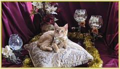 Kitty Chic ~ Cute Kitty Cat Kitten in Holiday Home Garden Art Decor with Wine Goblets, Candles & Flower Bouquet. Cute Kitty Cat Kitten ...Kitties Cats Kittens...Cute Kitty Cat Kitten... (Chantal PhotoPix) Tags: family flowers decorations friends light wallpaper portrait pet cats pets holiday canada flower color cute art nature beautiful beauty animal animals cat photoshop canon painting fun photography photo interestingness amazing kitten feline funny shiny colorful candles day purple artistic photos sweet burgundy background awesome tabby interestingness1 kitty kittens best hires mainecoon kitties tabbies glam felines chic lovely decor luxury hdr cutecat cutecats homeandgarden cutekitten cutekittens homegarden mainecoons chantalc winegoblets lolcats chantal777livecom