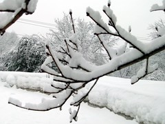 SnowTree_CloseUp_211c