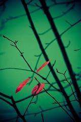 unbenannt-16 (spreeliebe) Tags: autumn berlin canon deutschland eos flora laub herbst natur pflanze blatt deu treptow digitalphotography sterben schoeneweide herbstlich herbstzeit kleinbild 400d canoneos400d digitalfotografie pflanzenteil