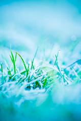 (..karen..) Tags: grass weeds frost d300 tamron90mmmacro