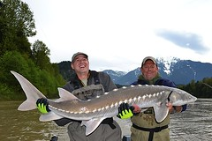 Keith's Sturgeon5 (Great River Fishing) Tags: fish fishing flyfishing trout fraserriver sturgeon steelhead slamon
