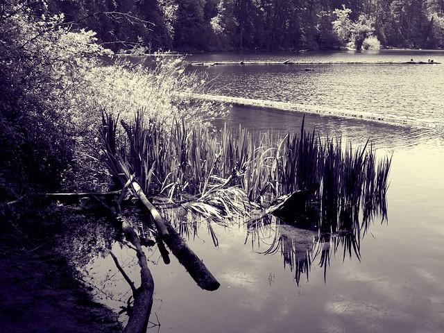 140/365 ~ Tranquil Lake
