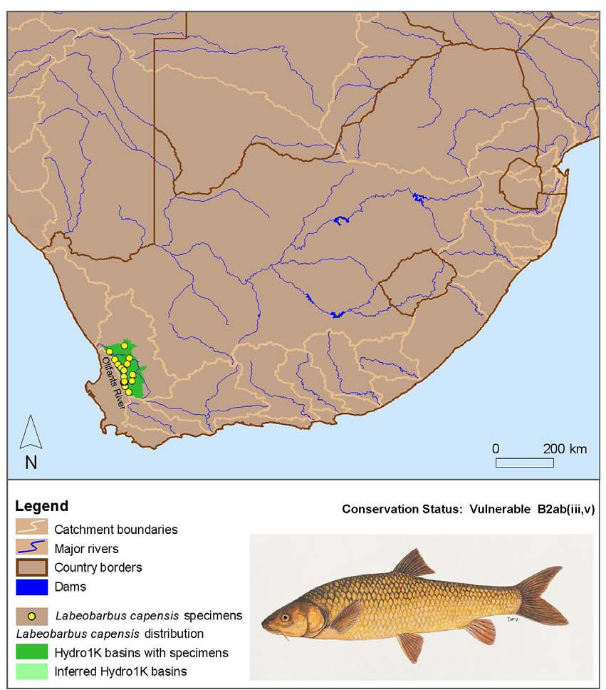 Freshwater fish of southern africa - Map From Technical Report On The State Of Yellowfishes In South Africa 2007 The Full Document Is Obtainable From Water Research Commission Publications