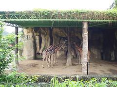 20110602酷節能體驗營 (25) (fifi_chiang) Tags: zoo taiwan olympus taipei ep1 木柵動物園 17mm 環保局 酷節能體驗營