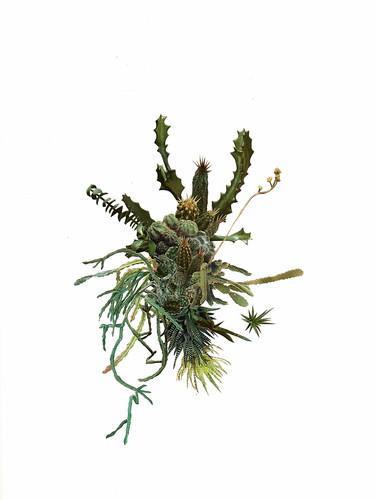 cactuscluster002