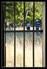 CONDANNATO A NON VIVERMI LA NATURA (DISAMISTADE_my life is a reportage!) Tags: natura concept concettuale prigione sbarre