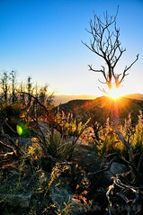 Chilao Sunset (Allison Achauer) Tags: camping sunset summer mountains hot tree nature forest landscape skeleton outdoors fire losangeles hiking bare naturallight flare campground burned 52 angelesnationalforest regrowth chilao afsdxvrzoomnikkor1685mmf3556ged 52weeks2011