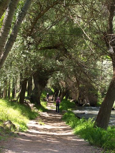 Ihlara Valley的綠色隧道