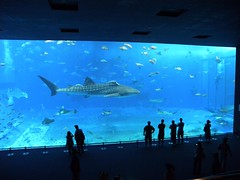 20110526 Okinawa Trip 4 (MaoPoPo & BiangBeiBei) Tags: fish japan aquarium sealife okinawa