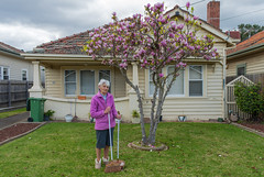 Yarraville (Westographer) Tags: yarraville melbourne australia westernsuburbs suburbia frontyard portrait gardener magnolia house home pink winterlight
