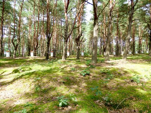 Inowłódz - Russian war cemetery, WWI (10)