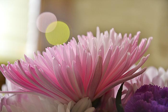 Flowers4 edited