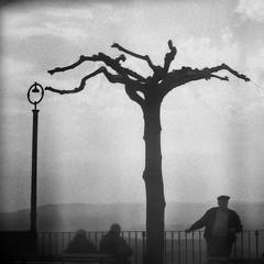 Attraverso i miei occhi... (Giuseppe Torcasio) Tags: life bw blur bn piazza albero calabria bianconero controluce vita sud lampione meridione attraversoimieiocchi giuseppetorcasio
