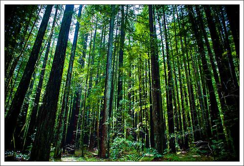 RedwoodSabbath-2462.jpg