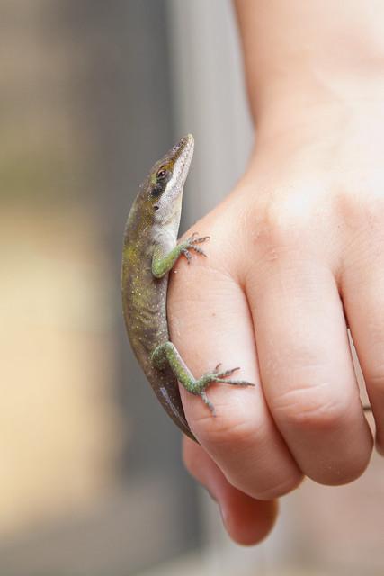Got A Lizard