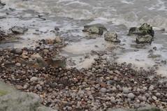 大肚溪口污染情形,照片提供:黃淑英國會辦公室