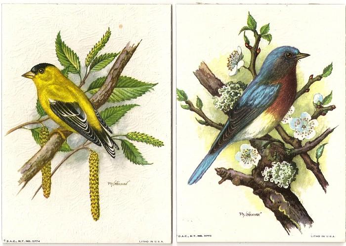 birdsonbranch