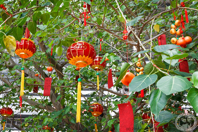 Lanterns And Oranges In Tree
