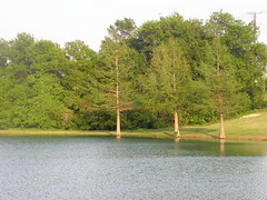 lake vista, lower lake