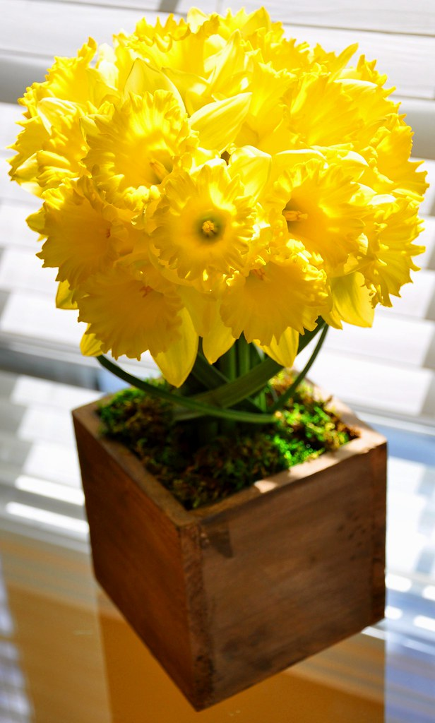 Daffodils in a rustic container