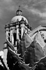Oaxaca_Ano_Nuevo_2011-20 (Chubakai) Tags: oaxaca mexico santodomingo nopal iglesia church convento bn bw white black blanco negro cielo canon 50d chubakai enero 2011 mariodominguez oulala oulalacommx ltytr1