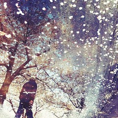Sakura Reflections